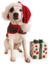 Elegant and unique Dog Christmas Stockings make a great gift for your or your dog lover friends!